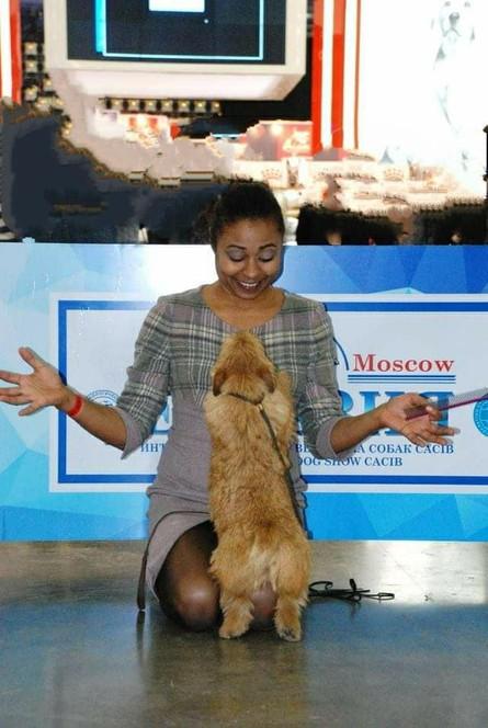 Выставочный груминг от специалистов породников Москва: Ховрино, м. Речной вокзал, Западное Дегунино