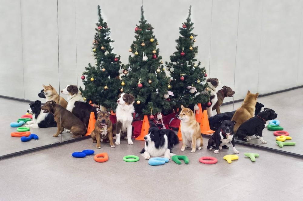 Детский сад для щенков Москва: Ховрино, м. Речной вокзал, Западное Дегунино