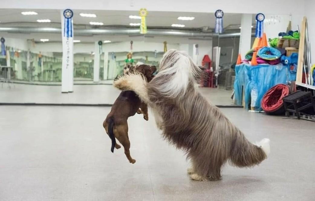 """Авторский курс послушания собак """"Растем вместе"""" Москва: Ховрино, м. Речной вокзал, Западное Дегунино"""
